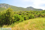 Near old Epidavros | Argolida (Argolis) Peloponnese | Greece Photo 4 - Photo GreeceGuide.co.uk