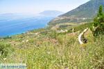Near old Epidavros | Argolida (Argolis) Peloponnese | Greece Photo 9 - Photo GreeceGuide.co.uk