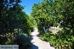 Koroni | Messenia Peloponnese | Greece  23 - Photo GreeceGuide.co.uk