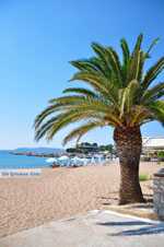 Finikounda | Messenia Peloponnese | Greece  4 - Photo GreeceGuide.co.uk