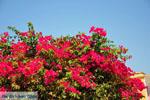 Methoni | Messenia Peloponnese | Greece  Photo 72 - Photo GreeceGuide.co.uk