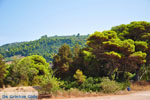 Agiannakis beach   Messenia Peloponnese   Photo 1 - Photo GreeceGuide.co.uk