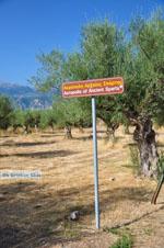 Ancient-Sparta (Archaia Sparti) | Lakonia Peloponnese | 7 - Photo GreeceGuide.co.uk