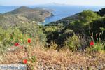 Poros | Saronic Gulf Islands | Greece  Photo 208 - Photo GreeceGuide.co.uk