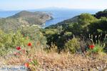 Poros | Saronic Gulf Islands | Greece  Photo 209 - Photo GreeceGuide.co.uk