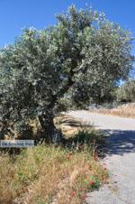 Poros | Saronic Gulf Islands | Greece  Photo 216 - Photo GreeceGuide.co.uk
