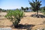 Poros   Saronic Gulf Islands   Greece  Photo 218 - Photo GreeceGuide.co.uk