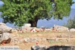 Poseidon heiligdom Poros   Saronic Gulf Islands   Greece  Photo 223 - Photo GreeceGuide.co.uk