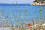 Poros | Saronic Gulf Islands | Greece  Photo 256 - Photo GreeceGuide.co.uk