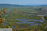 Ammoudia, Acheron delta - Prefecture Preveza -  Photo 9 - Photo GreeceGuide.co.uk