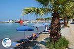 Faliraki Rhodes - Island of Rhodes Dodecanese - Photo 231 - Photo GreeceGuide.co.uk