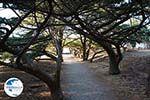 Filerimos Rhodes - Island of Rhodes Dodecanese - Photo 303 - Photo GreeceGuide.co.uk