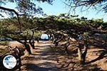 Filerimos Rhodes - Island of Rhodes Dodecanese - Photo 304 - Photo GreeceGuide.co.uk
