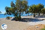 The beaches Kampos Samos and Votsalakia Samos   Greece Photo 19 - Photo GreeceGuide.co.uk