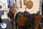 Oia Santorini | Cyclades Greece | Photo 1173 - Photo GreeceGuide.co.uk