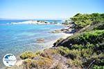 Beaches and nature near Vourvourou | Sithonia Halkidiki | Greece  Photo 26 - Photo GreeceGuide.co.uk