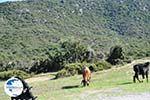 Somewhere between Paralia Sykias and Kalamitsi | Sithonia Halkidiki | Photo 4 - Photo GreeceGuide.co.uk