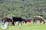 Somewhere between Paralia Sykias and Kalamitsi | Sithonia Halkidiki | Photo 5 - Photo GreeceGuide.co.uk