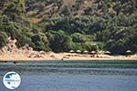 beach near Koutsouri on the island Skiathos Photo 2 - Photo GreeceGuide.co.uk