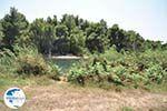 Beschermd gebied Koukounaries - Skiathos - Photo 7 - Photo GreeceGuide.co.uk