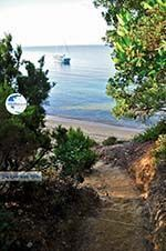 Maratha beach near Koukounaries | Skiathos Sporades | Greece  Photo 3 - Photo GreeceGuide.co.uk