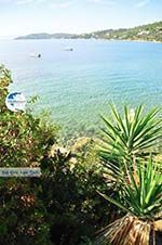 Megali Ammos (Ftelia) | Skiathos Sporades | Greece  Photo 15 - Photo GreeceGuide.co.uk