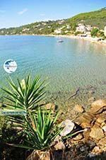 Megali Ammos (Ftelia) | Skiathos Sporades | Greece  Photo 16 - Photo GreeceGuide.co.uk