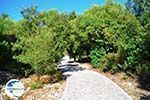 Kastro | Skiathos Sporades | Greece  Photo 3 - Photo GreeceGuide.co.uk