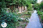Maniatis Garden Achladies | Skiathos Sporades | Greece  Photo 5 - Photo GreeceGuide.co.uk
