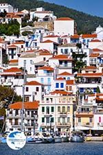 Skopelos town | Sporades | Greece  Photo 6 - Photo GreeceGuide.co.uk
