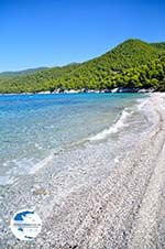 Milia | Skopelos Sporades | Greece  Photo 14 - Photo GreeceGuide.co.uk