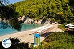 Kastani | Skopelos Sporades | Greece  Photo 4 - Photo GreeceGuide.co.uk