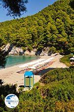 Kastani   Skopelos Sporades   Greece  Photo 5 - Photo GreeceGuide.co.uk
