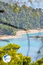 Near the Beaches Kastani and Milia | Skopelos Sporades | Greece  Photo 1 - Photo GreeceGuide.co.uk