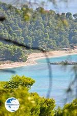 Near the Beaches Kastani and Milia | Skopelos Sporades | Greece  Photo 2 - Photo GreeceGuide.co.uk
