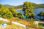 Panormos Skopelos | Sporades | Greece  Photo 19 - Photo GreeceGuide.co.uk