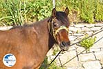 Paard in Aspous | Skyros Greece - Photo GreeceGuide.co.uk