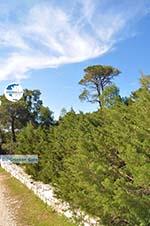 Bossen  near Agios Panteleimon | Skyros Greece Photo 1 - Photo GreeceGuide.co.uk