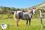 Near Aghios Fokas | Skyros Greece Photo 8 - Photo GreeceGuide.co.uk