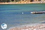 Near Aghios Fokas | Skyros Greece Photo 11 - Photo GreeceGuide.co.uk