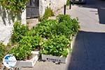Skyros town | Skyros Greece | Greece  Photo 1 - Photo GreeceGuide.co.uk