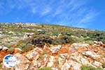 From Kalamitsa to Vouno | The zuiden of Skyros Photo 2 - Photo GreeceGuide.co.uk
