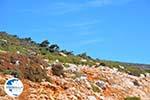 From Kalamitsa to Vouno | The zuiden of Skyros Photo 3 - Photo GreeceGuide.co.uk