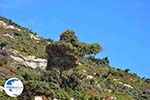 From Kalamitsa to Vouno | The zuiden of Skyros Photo 4 - Photo GreeceGuide.co.uk