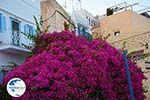 Ano Syros | Greece | Greece  Photo 40 - Photo GreeceGuide.co.uk