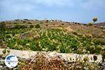 Sa Michalis   Northern Syros   Greece Photo 43 - Photo GreeceGuide.co.uk