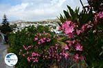 Falatados near Exomvourgo Tinos | Greece | Photo 5 - Photo GreeceGuide.co.uk