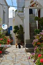Falatados near Exomvourgo Tinos | Greece | Photo 22 - Photo GreeceGuide.co.uk