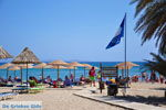 Vai Crete | Lassithi Crete | Greece  Photo 55 - Photo GreeceGuide.co.uk