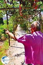 Zakros and Kato Zakros - Crete - Greece  70 - Photo GreeceGuide.co.uk